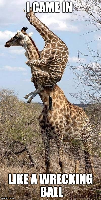 Funny Giraffe | I CAME IN LIKE A WRECKING BALL | image tagged in funny giraffe | made w/ Imgflip meme maker