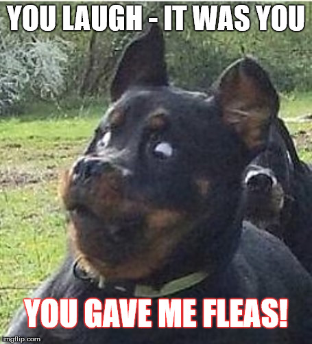 YOU LAUGH - IT WAS YOU YOU GAVE ME FLEAS! | made w/ Imgflip meme maker