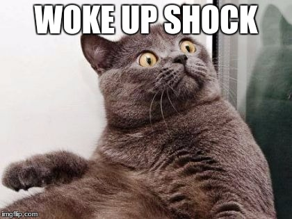 WOKE UP SHOCK | image tagged in surprised fat cat | made w/ Imgflip meme maker