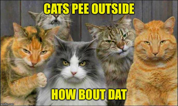 "Gangster cats ask ""How bout dah?"" 