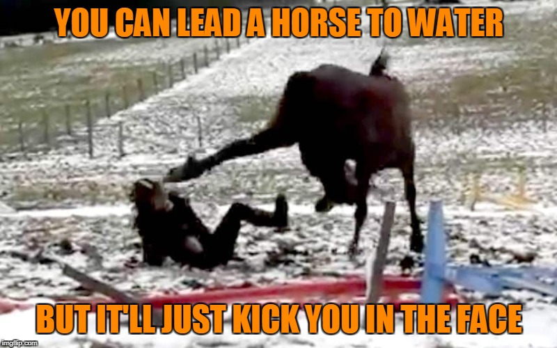 YOU CAN LEAD A HORSE TO WATER BUT IT'LL JUST KICK YOU IN THE FACE | made w/ Imgflip meme maker