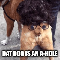 DAT DOG IS AN A-HOLE | made w/ Imgflip meme maker