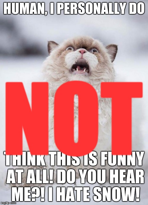 Scared Cat | HUMAN, I PERSONALLY DO THINK THIS IS FUNNY AT ALL! DO YOU HEAR ME?! I HATE SNOW! NOT | image tagged in scared cat | made w/ Imgflip meme maker