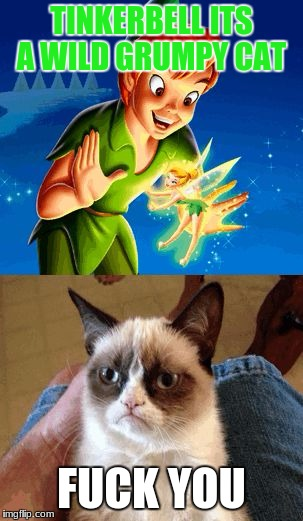 Grumpy Cat Does Not Believe Meme | TINKERBELL ITS A WILD GRUMPY CAT F**K YOU | image tagged in memes,grumpy cat does not believe,grumpy cat | made w/ Imgflip meme maker
