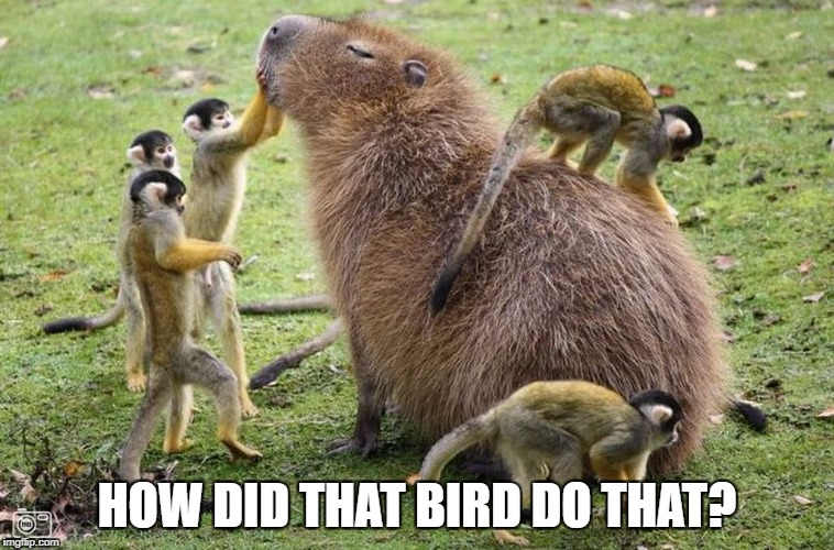 HOW DID THAT BIRD DO THAT? | made w/ Imgflip meme maker