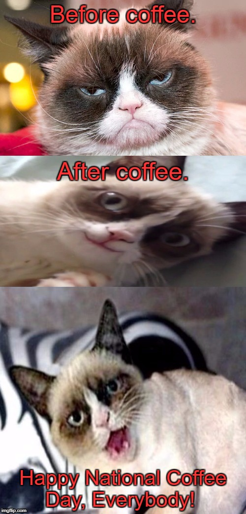 It's that day, everybody! | Before coffee. After coffee. Happy National Coffee Day, Everybody! | image tagged in bad pun grumpy cat,grumpy cat,i love coffee,national coffee day,memes | made w/ Imgflip meme maker