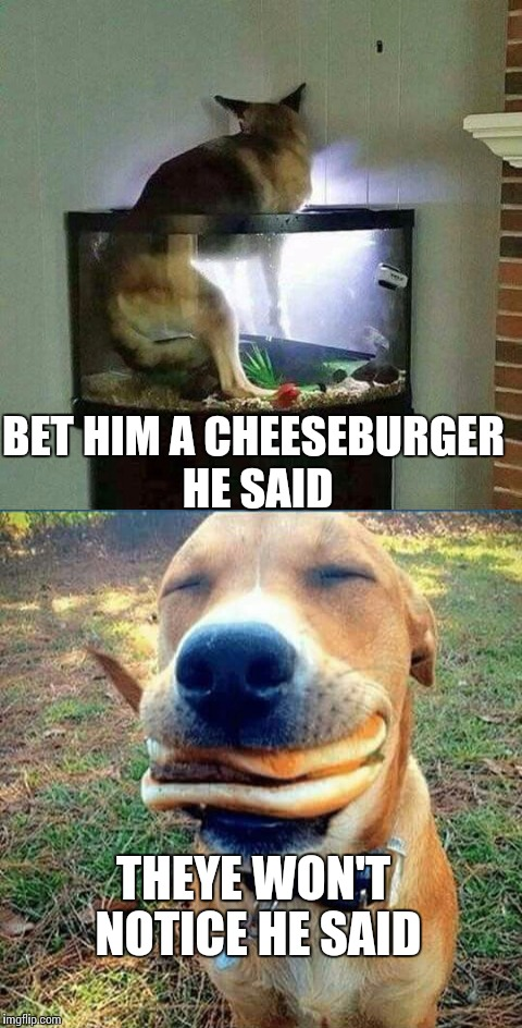 I dare ya | BET HIM A CHEESEBURGER HE SAID THEYE WON'T NOTICE HE SAID | image tagged in memes,dog,meme,funny memes | made w/ Imgflip meme maker
