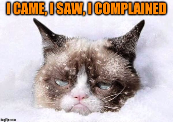 Grumpy Cat Frozen Pictures