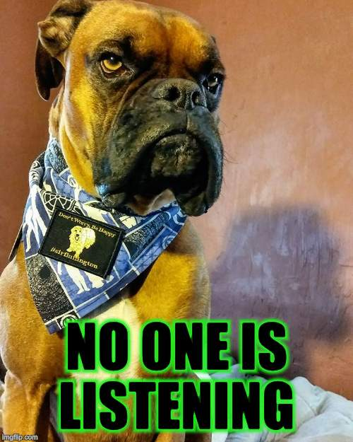 Grumpy Dog | NO ONE IS LISTENING | image tagged in grumpy dog | made w/ Imgflip meme maker