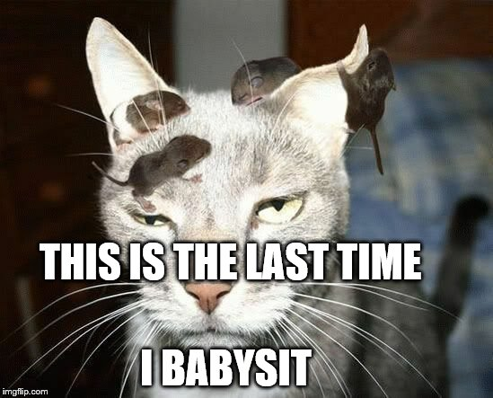 Babysitting | THIS IS THE LAST TIME I BABYSIT | image tagged in funny cat memes,rat meme,babysitter | made w/ Imgflip meme maker