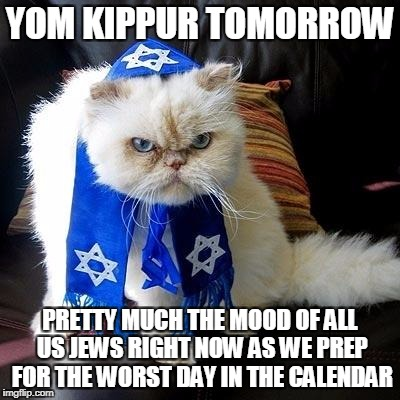 YOM KIPPUR TOMORROW PRETTY MUCH THE MOOD OF ALL US JEWS RIGHT NOW AS WE PREP FOR THE WORST DAY IN THE CALENDAR | image tagged in jew cat | made w/ Imgflip meme maker