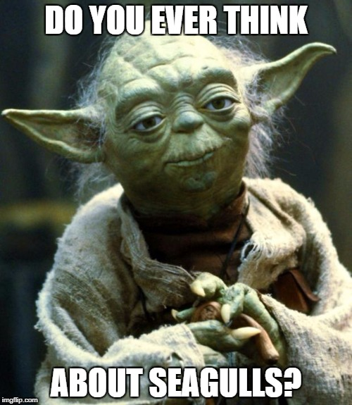 Star Wars Yoda Meme | DO YOU EVER THINK ABOUT SEAGULLS? | image tagged in memes,star wars yoda | made w/ Imgflip meme maker