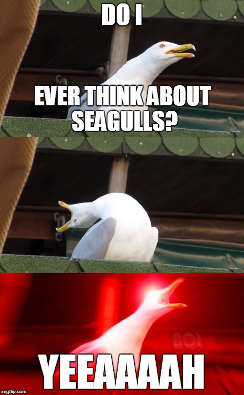DO I YEEAAAAH EVER THINK ABOUT SEAGULLS? | made w/ Imgflip meme maker