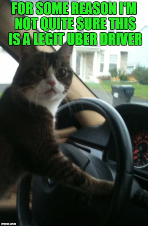 You're my driver??? |  FOR SOME REASON I'M NOT QUITE SURE THIS IS A LEGIT UBER DRIVER | image tagged in jojo the driving cat,uber,i don't think so | made w/ Imgflip meme maker