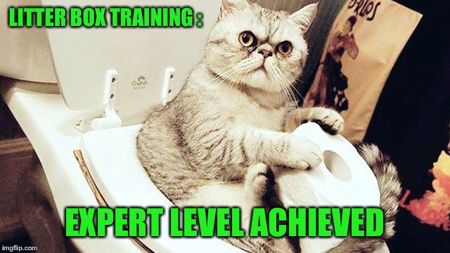 LITTER BOX TRAINING : EXPERT LEVEL ACHIEVED | made w/ Imgflip meme maker
