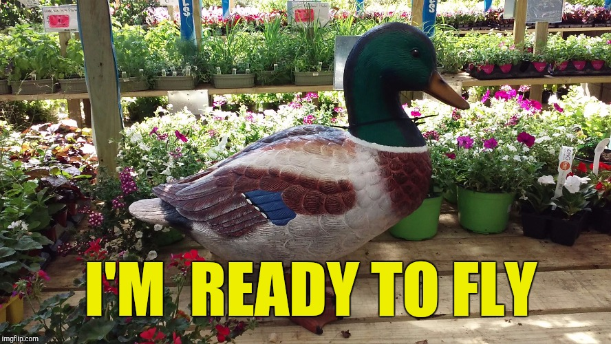 Getting the duck out  | I'M  READY TO FLY | image tagged in memes,good news everyone,breaking news | made w/ Imgflip meme maker