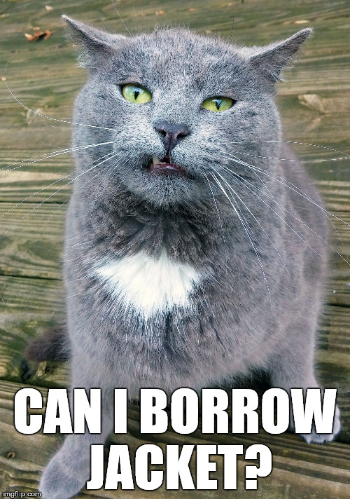 Smiley Cat | CAN I BORROW JACKET? | image tagged in smiley cat | made w/ Imgflip meme maker