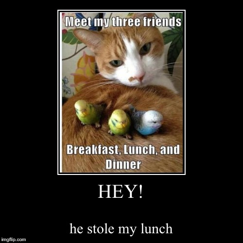 HEY! | he stole my lunch | image tagged in funny,demotivationals | made w/ Imgflip demotivational maker