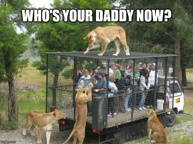 Lion cage people | WHO'S YOUR DADDY NOW? | image tagged in lion cage people | made w/ Imgflip meme maker