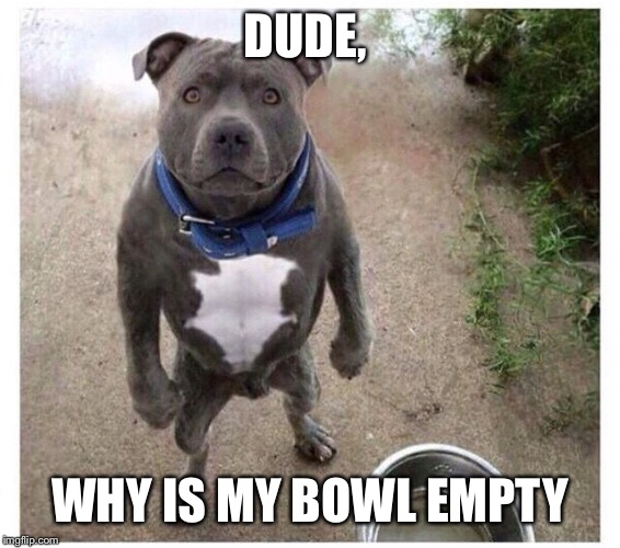 Why is my owl empty | DUDE, WHY IS MY BOWL EMPTY | image tagged in doge,food,bowl | made w/ Imgflip meme maker