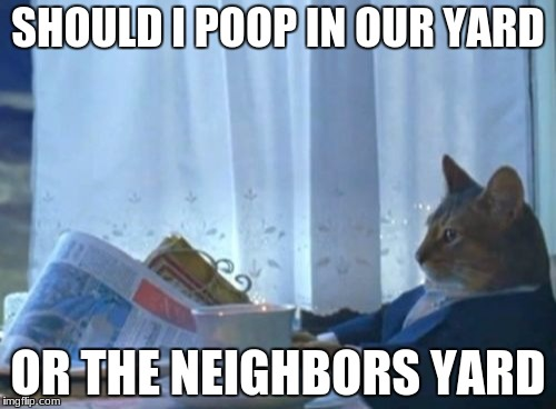 I Should Buy A Boat Cat Meme | SHOULD I POOP IN OUR YARD OR THE NEIGHBORS YARD | image tagged in memes,i should buy a boat cat | made w/ Imgflip meme maker
