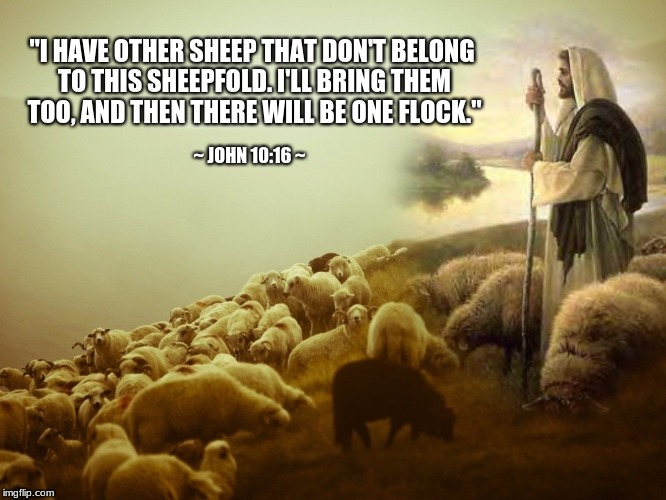 "Jesus: I have other sheep | ""I HAVE OTHER SHEEP THAT DON'T BELONG TO THIS SHEEPFOLD. I'LL BRING THEM TOO, AND THEN THERE WILL BE ONE FLOCK."" ~ JOHN 10:16 ~ 