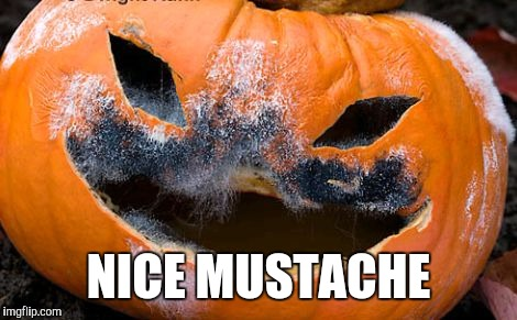 When Pumpkins Observe No Shave November | NICE MUSTACHE | image tagged in no shave november,halloween,cancer,funny memes | made w/ Imgflip meme maker