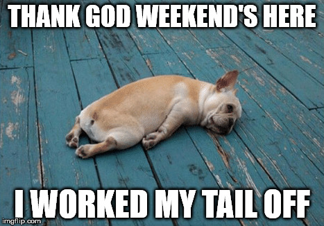 Dog Tail | THANK GOD WEEKEND'S HERE I WORKED MY TAIL OFF | image tagged in funny animals | made w/ Imgflip meme maker