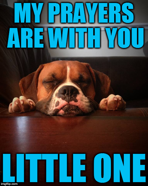 Prayer dog | MY PRAYERS ARE WITH YOU LITTLE ONE | image tagged in prayer dog | made w/ Imgflip meme maker