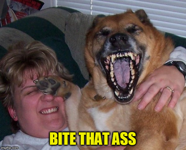 laughing dog | BITE THAT ASS | image tagged in laughing dog | made w/ Imgflip meme maker