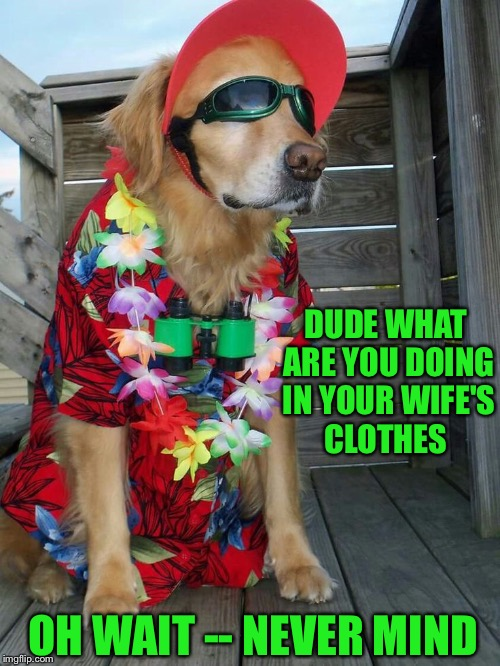 DUDE WHAT ARE YOU DOING IN YOUR WIFE'S CLOTHES OH WAIT -- NEVER MIND | made w/ Imgflip meme maker