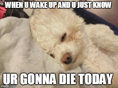 WHEN U WAKE UP AND U JUST KNOW UR GONNA DIE TODAY | image tagged in dog,wake up | made w/ Imgflip meme maker