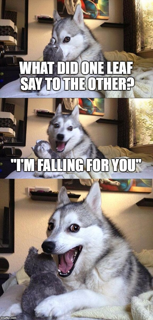 "Bad Pun Dog Meme | WHAT DID ONE LEAF SAY TO THE OTHER? ""I'M FALLING FOR YOU"" 