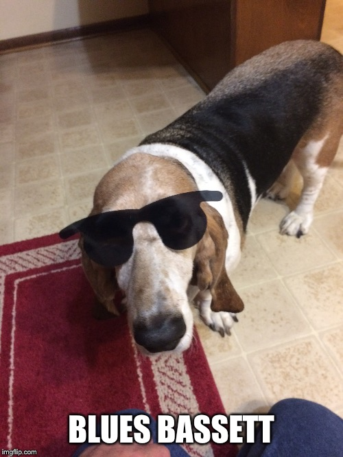 I'm a soul dawg ..... | CAMEL UP OR  CAMEL CUP ??!!?? | image tagged in memes,bassett hound,blues bassett,blues brothers | made w/ Imgflip meme maker