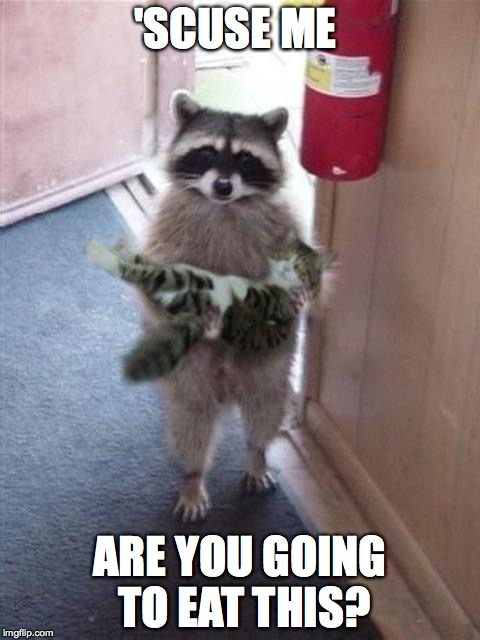Cat Burglar Raccoon | 'SCUSE ME ARE YOU GOING TO EAT THIS? | image tagged in cat burglar raccoon | made w/ Imgflip meme maker