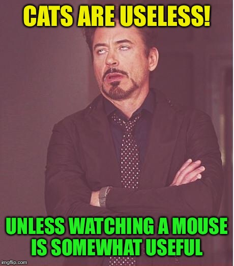 Face You Make Robert Downey Jr Meme | CATS ARE USELESS! UNLESS WATCHING A MOUSE IS SOMEWHAT USEFUL | image tagged in memes,face you make robert downey jr | made w/ Imgflip meme maker