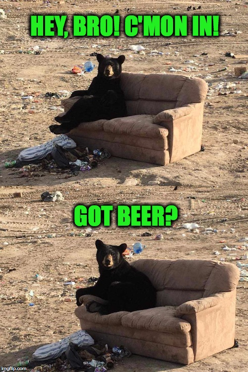 Sunday Chillin' | HEY, BRO! C'MON IN! GOT BEER? | image tagged in bears for beer | made w/ Imgflip meme maker