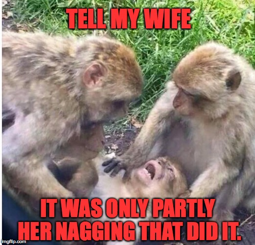 And as the curtain descended, his final thoughts were of his beloved Kiko... | TELL MY WIFE IT WAS ONLY PARTLY HER NAGGING THAT DID IT. | image tagged in shocked monkey,memes,monkeys,tell my wife | made w/ Imgflip meme maker