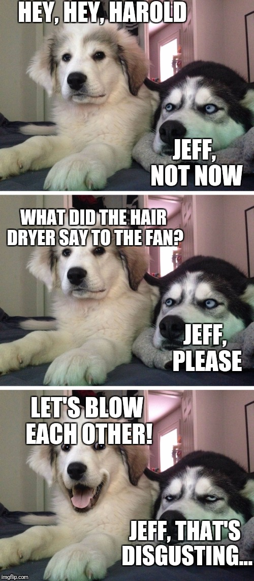 Hair dryer and the fan | HEY, HEY, HAROLD JEFF, NOT NOW WHAT DID THE HAIR DRYER SAY TO THE FAN? JEFF, PLEASE LET'S BLOW EACH OTHER! JEFF, THAT'S DISGUSTING... | image tagged in bad pun dogs,bad pun,funny,meme,pun,dirty joke | made w/ Imgflip meme maker