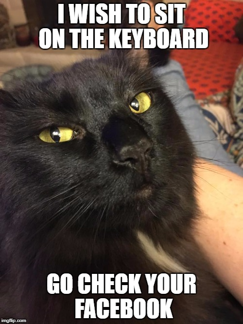I WISH TO SIT ON THE KEYBOARD GO CHECK YOUR FACEBOOK | image tagged in cat on keyboard | made w/ Imgflip meme maker