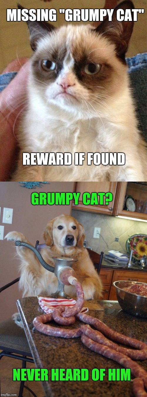 """Link"" to the disappearance of Grumpy Cat 