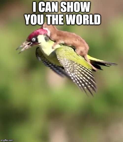 Weasel Riding A Woodpecker |  I CAN SHOW YOU THE WORLD | image tagged in weasel riding a woodpecker | made w/ Imgflip meme maker