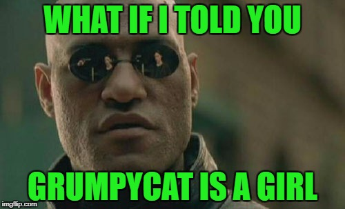 Matrix Morpheus Meme | WHAT IF I TOLD YOU GRUMPYCAT IS A GIRL | image tagged in memes,matrix morpheus | made w/ Imgflip meme maker