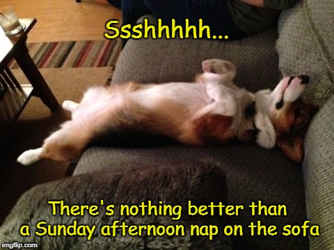 A Lazy Sunday Afternoon | Ssshhhhh... There's nothing better than a Sunday afternoon nap on the sofa | image tagged in dog,nap | made w/ Imgflip meme maker