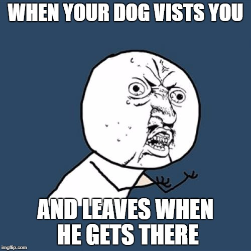 Y U No Meme | WHEN YOUR DOG VISTS YOU AND LEAVES WHEN HE GETS THERE | image tagged in memes,y u no | made w/ Imgflip meme maker