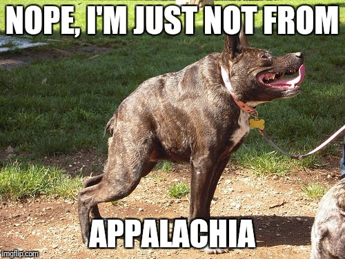 NOPE, I'M JUST NOT FROM APPALACHIA | image tagged in inbred dog | made w/ Imgflip meme maker