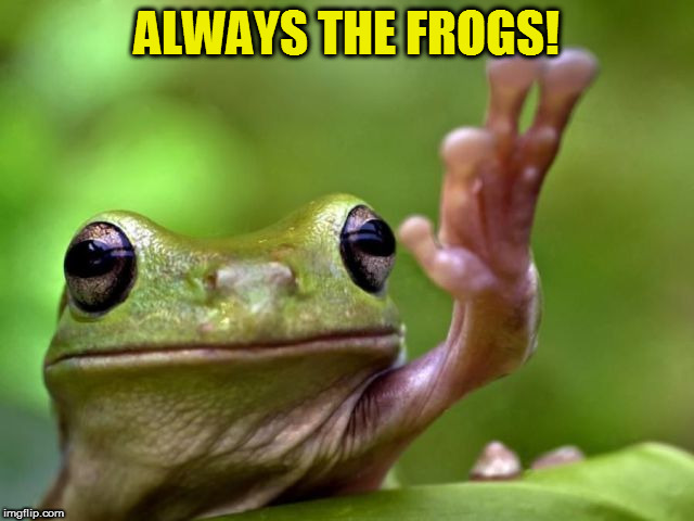 ALWAYS THE FROGS! | made w/ Imgflip meme maker