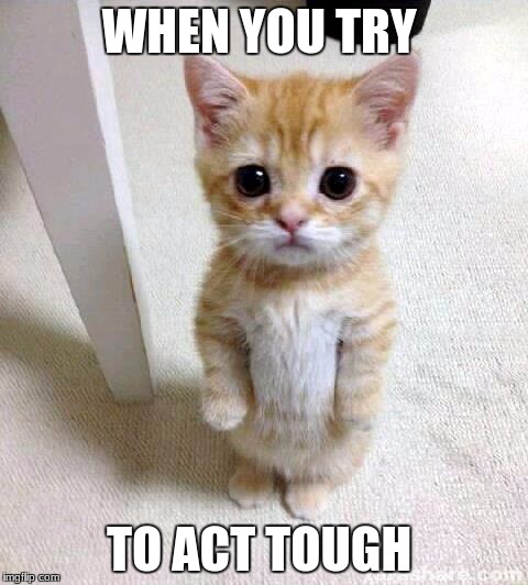 Cute Cat Meme | WHEN YOU TRY TO ACT TOUGH | image tagged in memes,cute cat | made w/ Imgflip meme maker