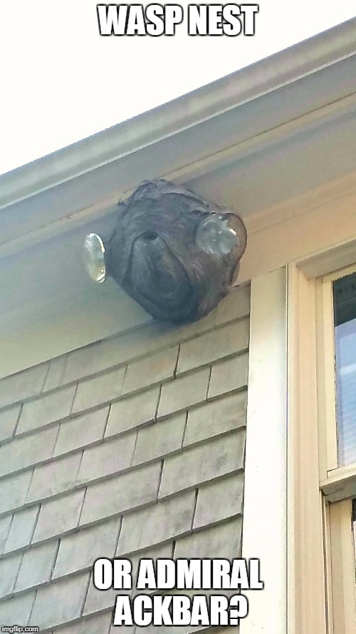 WASP NEST OR ADMIRAL ACKBAR? | image tagged in star wars | made w/ Imgflip meme maker