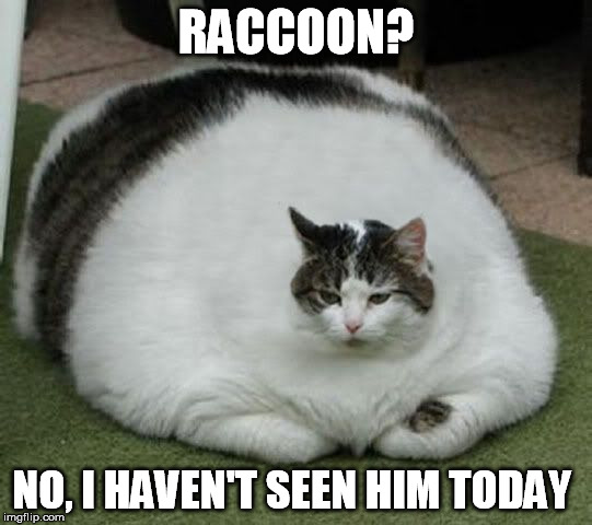 RACCOON? NO, I HAVEN'T SEEN HIM TODAY | made w/ Imgflip meme maker